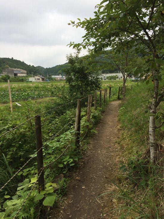 菖蒲園への小道